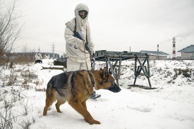 俄军演练布雷与扫雷:军犬很醒目