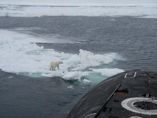 俄核潜艇在北极遇上北极熊 双方都很淡定