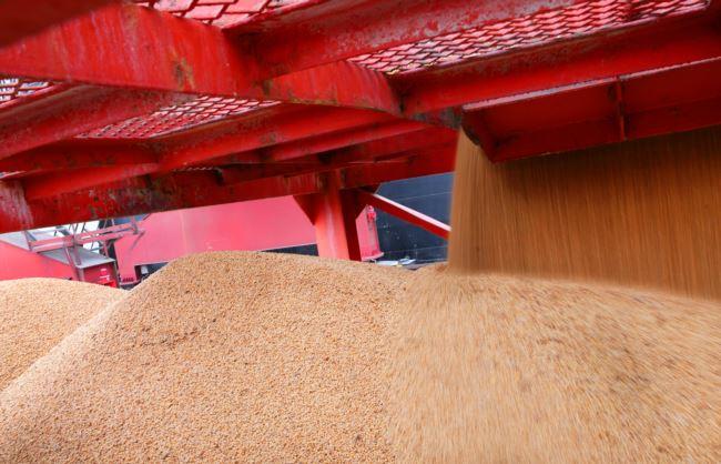 2018年4月4日,在中国江苏南通的一个港口进口的大豆。中国对美国增加关税的商品以农产品和汽车为主,包括大豆。
