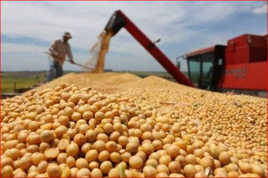 大豆只是中国丢出的一颗糖 重磅在这里